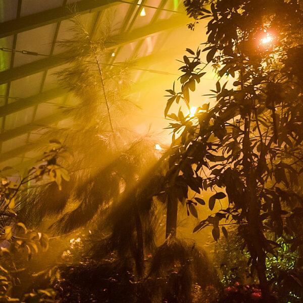 Тропический горный туманный лес в Аптекарском огороде